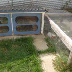 außengehege meerschweinchen