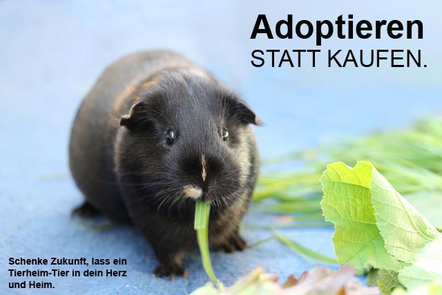 kaninchen-adoption-kaufen