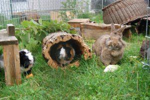 meerschweinchen kaninchen