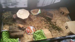 gehege-meerschweinchen