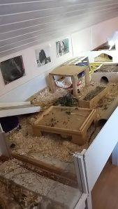 gehege-meerschweinchen1