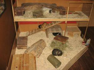 wohnungsgehege-meerschweinchen