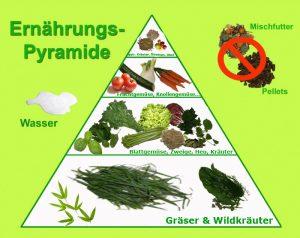 ernaehrungs-pyramide-meerschweinchen-kopie2-kopie
