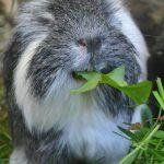 Gras & Wiesenkräuter