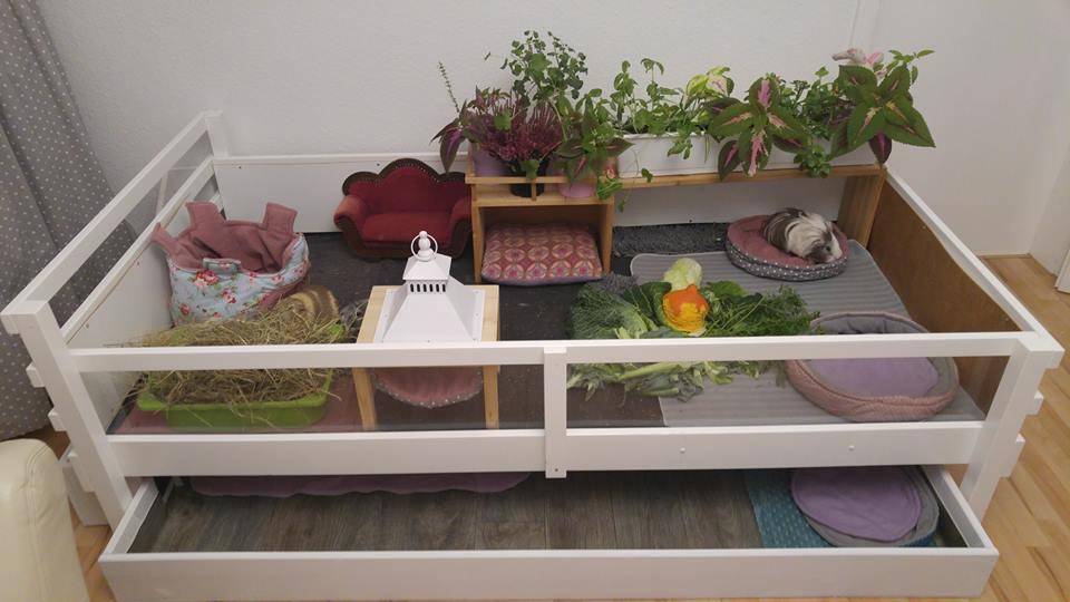 ein bett umgebaut als gehege meerschweinchenwiese. Black Bedroom Furniture Sets. Home Design Ideas