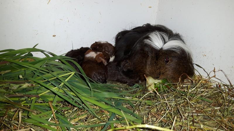 Muttertier mit Neugeborenen